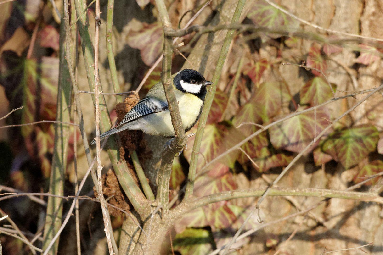 13 -2 Quelques heures dans le parc la Haute-Île : 11/02/2012