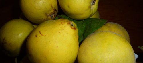 Le coing... le fruit parfumé de l'automne
