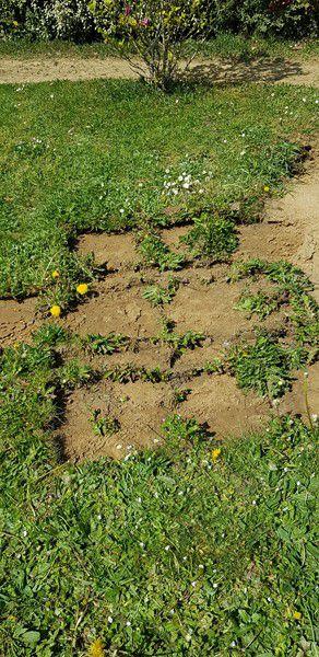 Mon jardin de fille :  L'avancée des travaux du potager