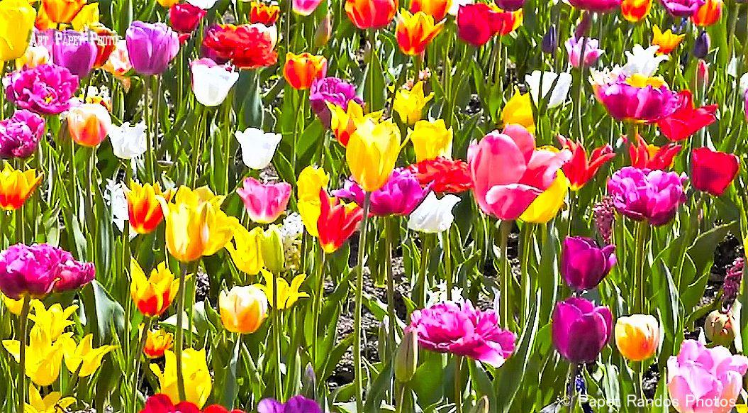 10 ans de fleurs un peu partout, Parcs, Bois, Tenerife (fleurs partout), Floralies : Bilzen, Bruxelles, Gand, (souvent en gros plans)