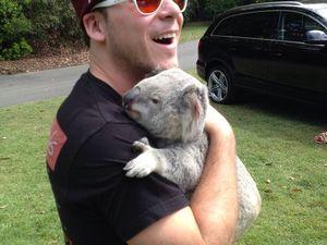 Justin Timberlake + Koala = Cuteness Overload #TKOALA
