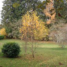 L'automne autour de chez moi