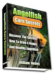 Angelfish (Diet and Nutrition, Diseases, Genetics ...)