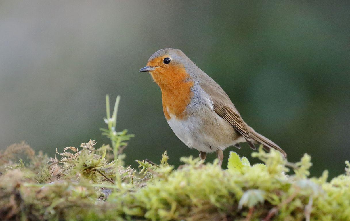 Oiseaux de mon jardin ( photographiés depuis ma Drink station )