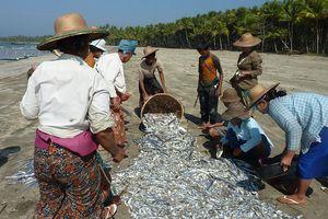 Chaungtha (2) ... Un tour en moto-taxi à la plage de Ngwe Saung