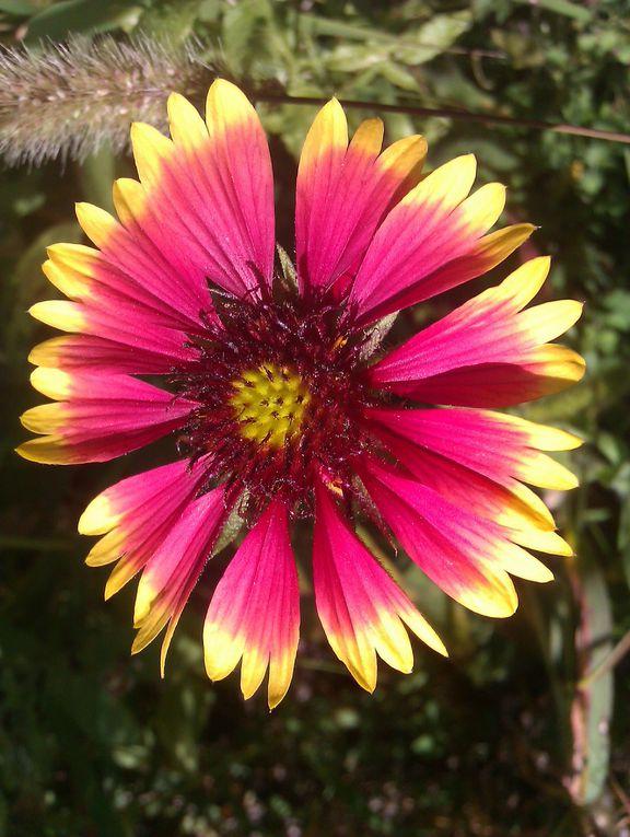Album - Fleurs-de-notre-jardin