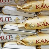 KAMUT® Khorasan Wheat - Ancient Grain Organically Grown