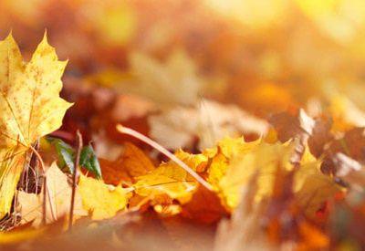 Défi d'automne..