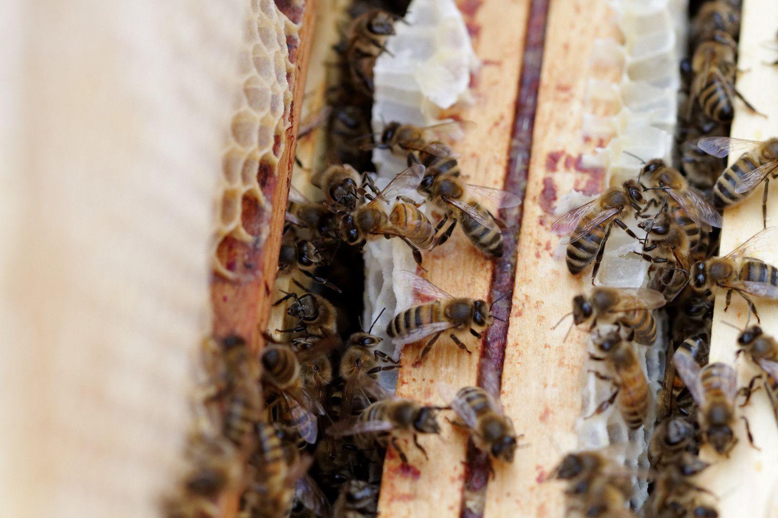 18 - Le rucher du parc la Haute-Île
