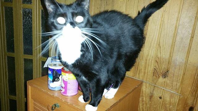 Tous les chats sont pris en charge par une association ou il y aura quarantaine,soins