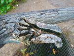 Giuseppe Penone: une branche tombée dans le jardin de la Fondation Cartier