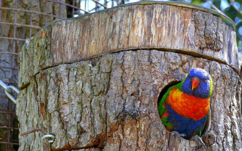 Dépaysement garanti au Parc des Oiseaux de Villars les Dombes