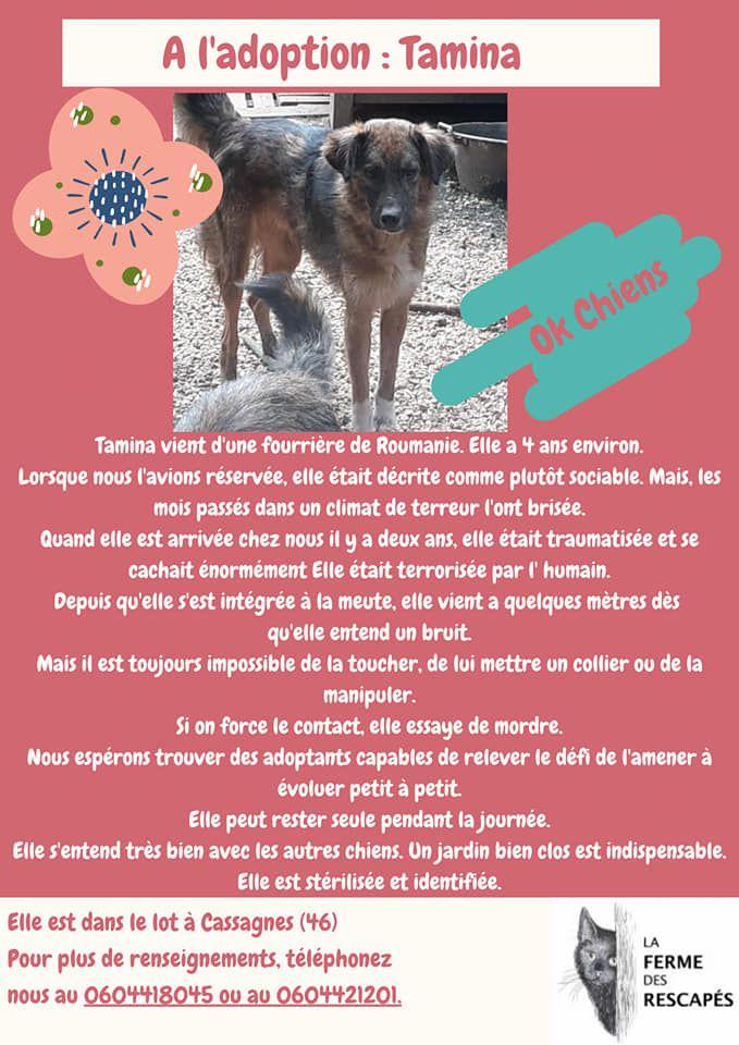 Petit récapitulatif en images de nos chiens à l'adoption