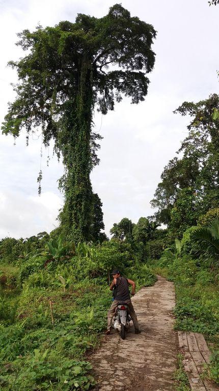 Indonésie - Le Bilan après 2 mois de voyage