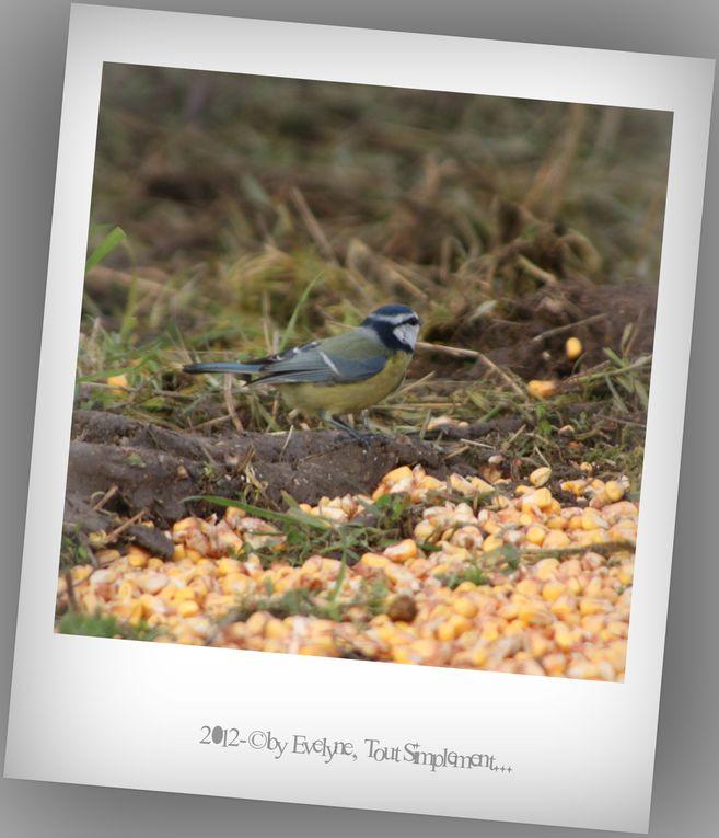 Album - Animaux, oiseaux