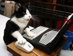 """Arthose chien chat : comment les aider par les plantes (Plusieurs conseils, dont une """"expérience"""" personnelle avec mon chat Pompon et l'avis de Marie-France Muller dont je reparlerai... que vous ayez à soigner chien, chat, oiseau, cochon d'inde, tortue, souris, poule, poisson,... ou même cheval !)"""