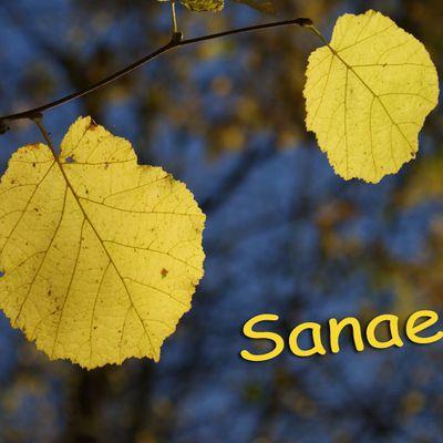 Carte à imprimer ~ Sanae