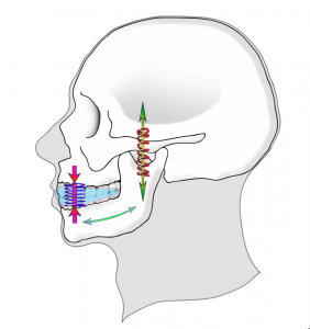 Notre avis sur l'activateur dentaire Kinépod OBA