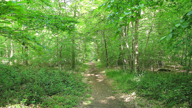 carrefour_Chemin du Plessis-Brion_Sentier (parcelle 134)