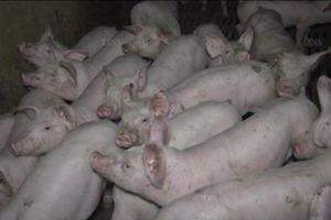 Maltraitance animale : une nouvelle vidéo choc