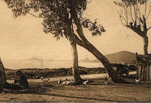 Evolution du paysage automobile Corse au XXème siècle