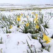 """Vague de froid : on va passer de """"l'hiver au printemps en une semaine"""", prévient Météo France"""