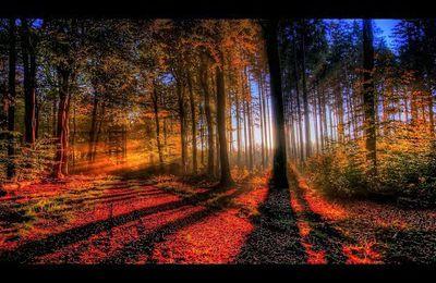 Le Coeur de la Forêt...