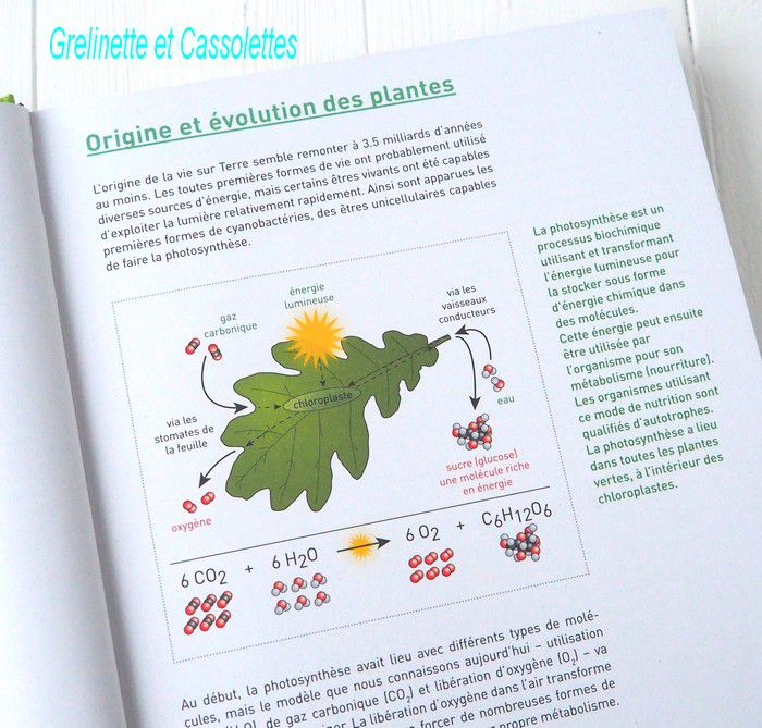 Connaissances Botaniques de Base en un seul Coup d'Oeil, 40 familles de plantes d'Europe Centrale
