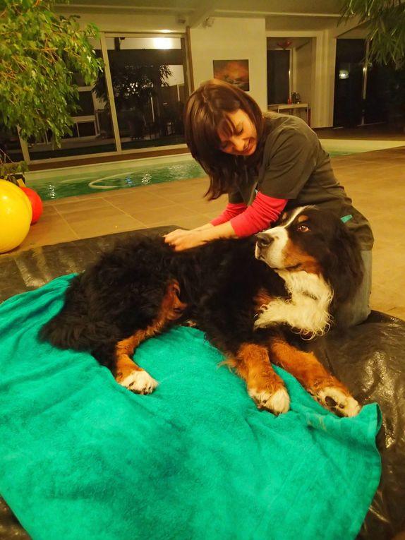 Album souvenir des chiens en cure au Centre VETOKINESIS