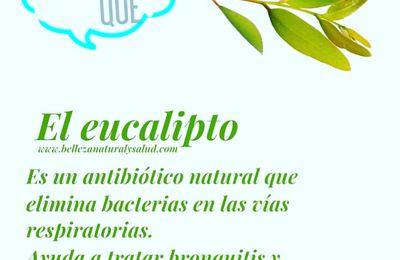 El eucalipto y sus propiedades