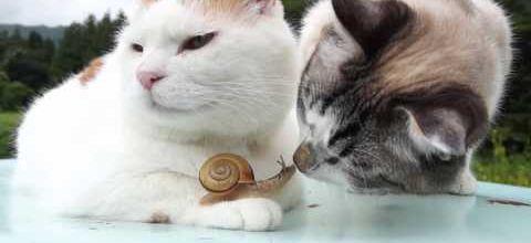 Copain escargot
