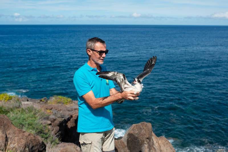Serge, bénévole à la Seor, relâche un Pétrel à Saint-Leu, à La Réunion . (R.Philippon)