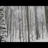 Relaxing Snowfall 2 Hours - Sound of Light Wind Breeze and Falling Snow in Forest