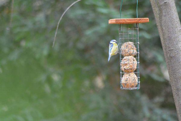 Les oiseaux apprécient l'aide...