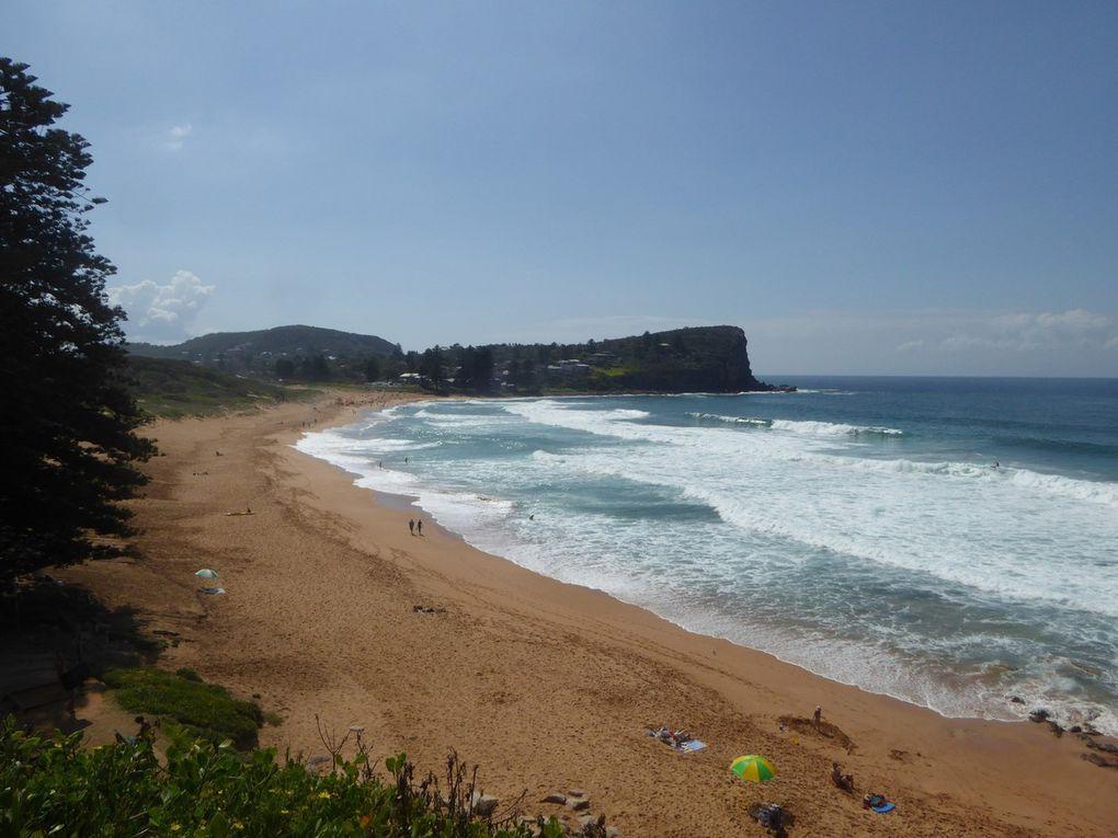 25 - D'Avalon beach à Narabeen Beach