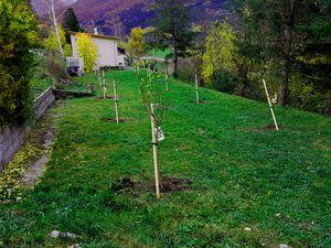 La Cipra  aide à planter des arbres fruitiers  la Mure Argens