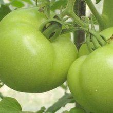 Mặt tốt và tác hại khi ăn cà chua sống như thế nào?