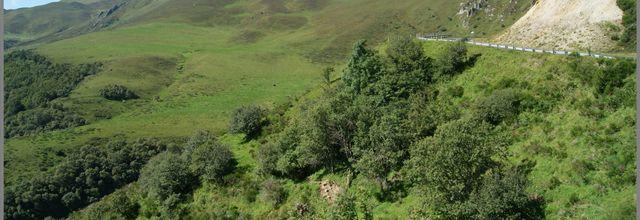 la Flore autour du Mont Dore