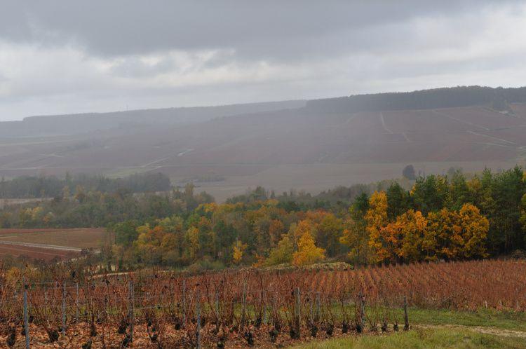 Le chemin du vigneron Champagne Celles sur Ource, la vallée de l'ource