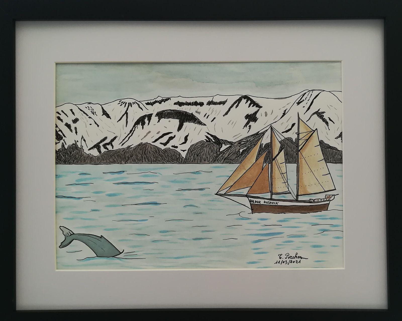 Baleine dans le fjord de Husavik et voilier Hildur