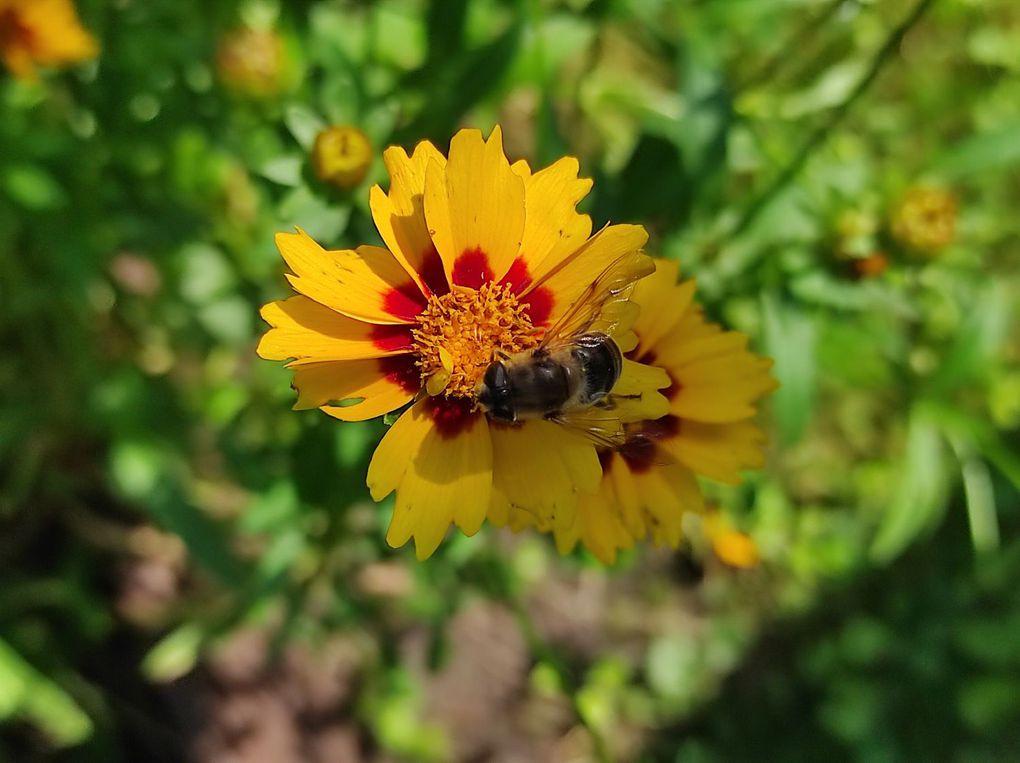 Mon jardin en été...