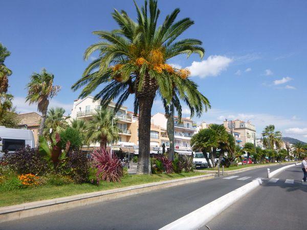 Palmiers, promenade ... mais les bateaux de tourismes sont tous à quai en raison du vent !