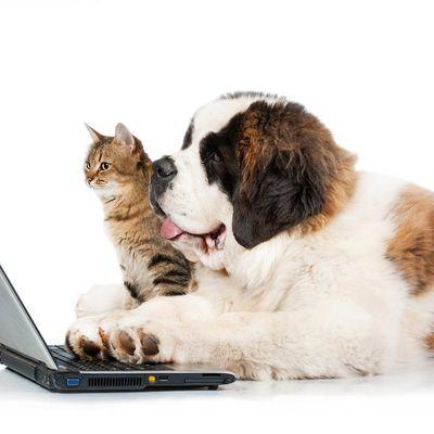 Guest-Blogging, la nouvelle pratique de la blogosphère !