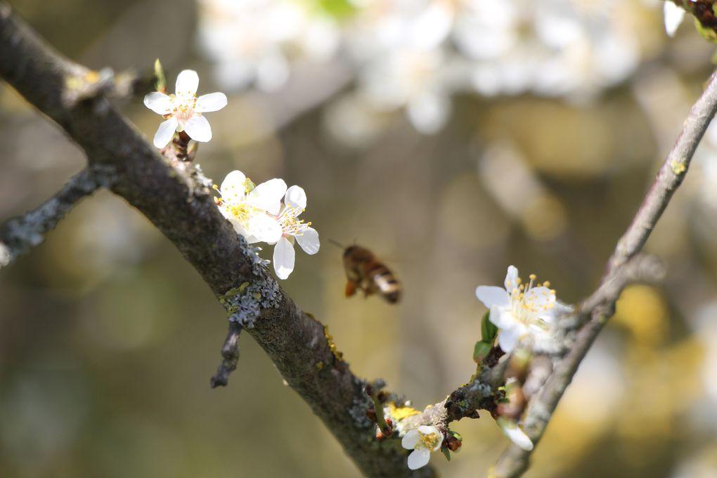 Au jardin en ce mi avril