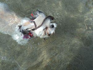 Iubi a fait sa première expérience de nage dans la mer... contrairement à Margot qui n'aimait pas se baigner !!!