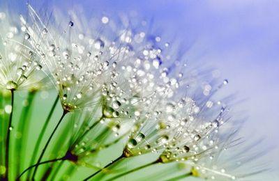 Le printemps est un paradis provisoire • Les Misérables, de Victor Hugo - Tome V • Livre 1er - La guerre entre quatre murs • XVI Comment de frère on devient père.  (extrait)