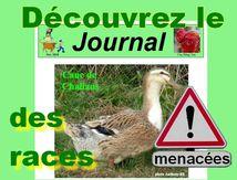 """Journal des races menacées (5) : spécial """"orphelines"""""""