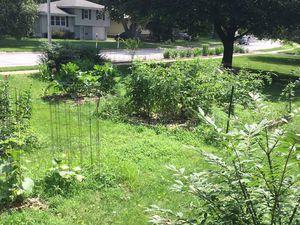 1ere recolte de mon jardin