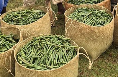 Buy Bulk Vanilla Beans Wholesale Online to Make Ice-Cream and Body Care Products