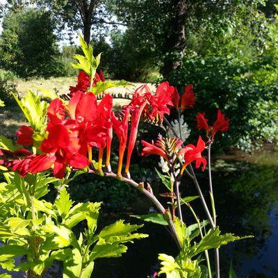 Quelques fleurs du jardin ...